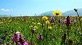 热尔大坝草原Rerdaba grassland - panoramio (4).jpg