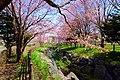 福住小川公園(Fukuzumi creek park) - panoramio (1).jpg