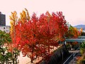 紅葉 - panoramio (2).jpg