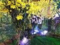 蘭賞 Orchid Festival - panoramio - lienyuan lee.jpg