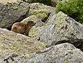 005 2014 08 07 Wildlebende Säugetiere.jpg