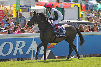 2015 Epsom Derby - Golden Horn at the 2015 Epsom Derby