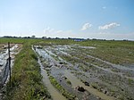 03735jfBirds Sanctuary Wetland Marshes Rice Fields Candaba Pampangafvf 32.JPG