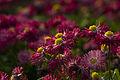 13-05-08-Flowers.jpg