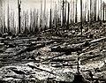 1939. Re-burn of logged landing in Tillmook Burn, Oregon. (33635216880).jpg