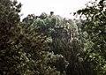 19880514165DR Hohnstein von der Hocksteinaussicht.jpg