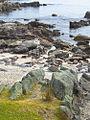 1 mount maunganui sea stones.jpg