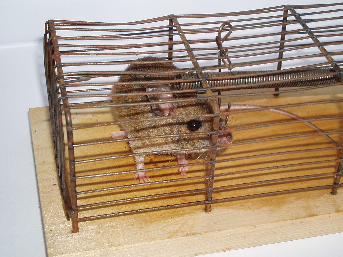 Humane Traps For Cats Edmonton