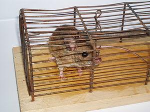 2005 mousetrap cage 3
