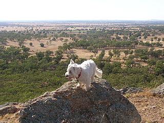 Mount Tilga mountain in Australia