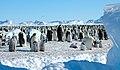 2007 Snow-Hill-Island Luyten-De-Hauwere-Emperor-Penguin-75.jpg