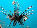 2010 Thailand Koh Phi Phi & Lanta scuba diving2.jpg
