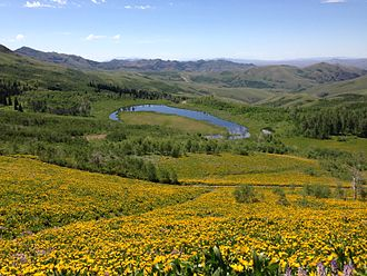 Mountain City Ranger District - Ponds and wildflowers in Copper Basin near Coon Creek Summit