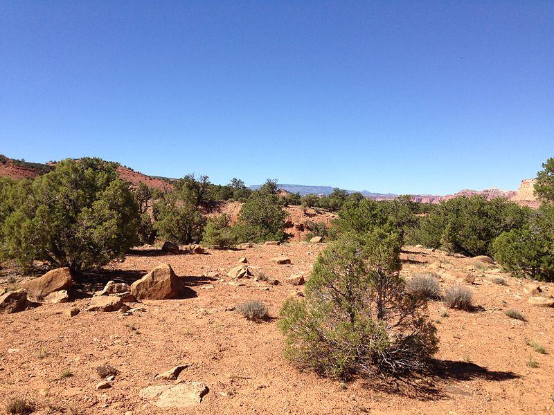 File:2013-09-23 14 39 41 Juniperus osteosperma and Pinus edulis along Capitol Reef Scenic Drive 5.1 miles from Utah State Route 24.JPG