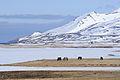 2014-04-29 13-05-37 Iceland - Fljótum Siglufjörður.JPG