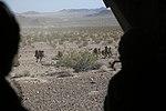 2014 Desert Scimitar 140511-M-CB021-499.jpg