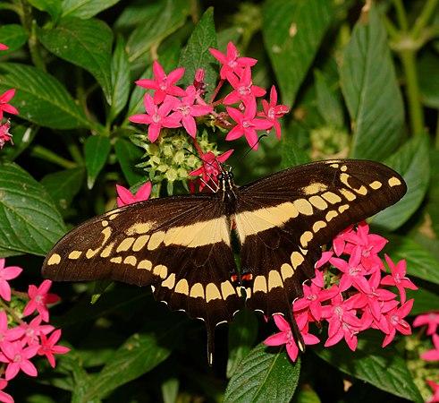 2015-10-24 13-02-32 papillon-hunawihr.jpg