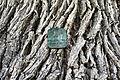 20150531 au krzyzowiec quercus pomnik.jpg