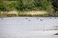 2015 05 24 Deutschland Baden-Württemberg Landkreis Sigmaringen Naturschutzgebiet Zielfinger Vogelsee (15).jpg