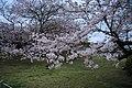 20160403 Himeji-Castle 3436 (26221538593).jpg