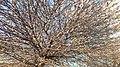 20200407 173302 Tree in Lodz.jpg