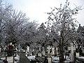 22. Bucuresti, Romania. Din Ciclul BUCURESTIUL SUB ASEDIUL FRIGULUI, Ianuarie 2019. Cimitirul Bellu Catolic.jpg