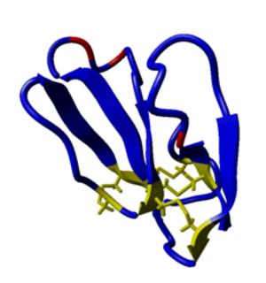 Calciseptine - 3D model of calciseptine structure