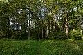 40-Парк усадьбы А.Д. Оболенского. Козельский район, Калужская область 2.jpg