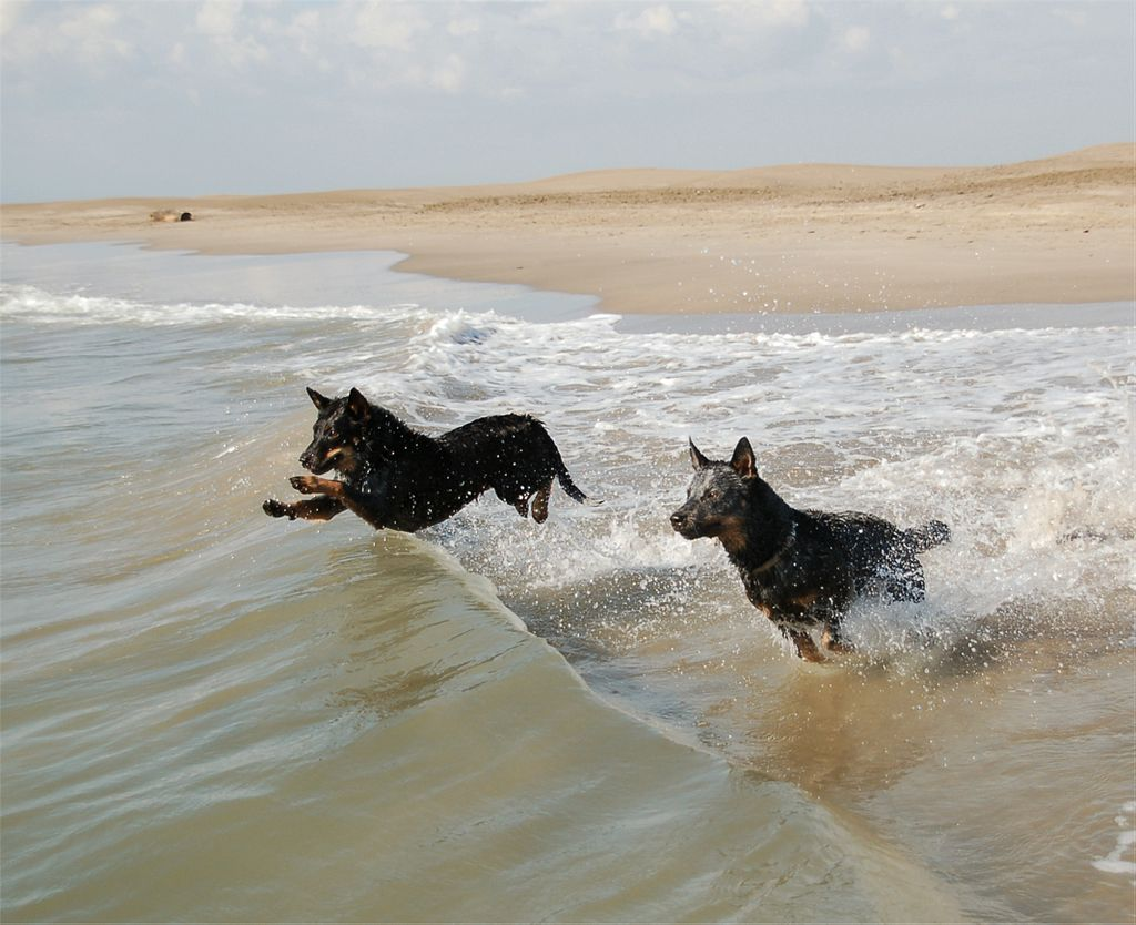 ACD swimming.jpg