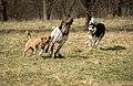 A dog - 8632313827.jpg