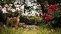 A l'ombre des jeunes chattes en fleurs - I - Flickr - torne (where's my lens cap^).jpg