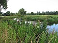 A meander of the River Wensum - geograph.org.uk - 894026.jpg