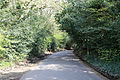 A road at the west of High Beech, Essex, England.jpg