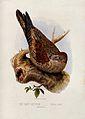 A tawny goatsucker bird (Nyctibius grandis). Colour lithogra Wellcome V0022182.jpg