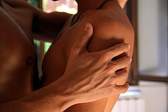 Sensory nervous system - Skin