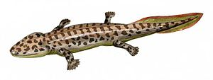 Colosteidae - 70 px