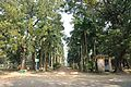 Acharya Jagadish Chandra Bose Indian Botanic Garden - Howrah 2011-01-08 9784.JPG