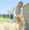 Afghan paravet.jpg