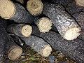Age rings wood.jpg