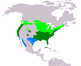 Breeding (light green), wintering (blue) and year-round (dark green) ranges of A. sponsa.