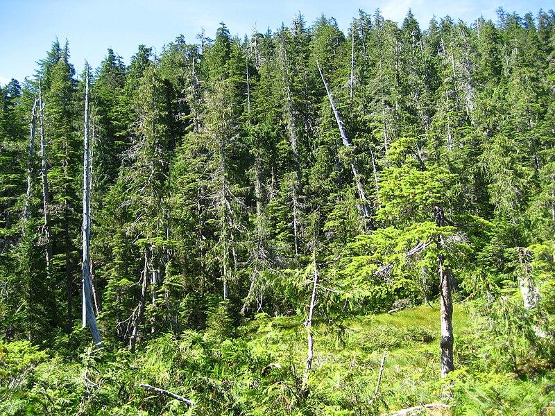 File:Alaska rainforest.jpg