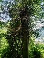 Albero ,vegetazione al interno del Parco del Monte Barro.jpg