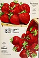 Allen's 1959 book of berries (1959) (17330452893).jpg