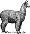 Alpaca (PSF).png