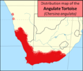 Angulate tortoise distribution map - chersina angulata.png