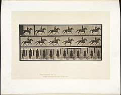 Animal locomotion. Plate 592 (Boston Public Library).jpg