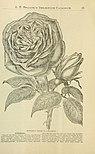 Annual catalogue of seeds, plants, bulbs, tools, etc. (1888) (17803051793).jpg