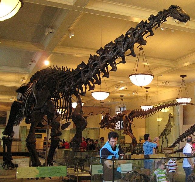 File:Apatosaurus.jpg