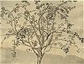 Apple-tree-1905.jpg!PinterestLarge.jpg