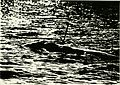 Application of remote sensing methods for tracking large cetaceans - North Atlantic right whales (Eubalaena glacialis) (1992) (19719766716).jpg